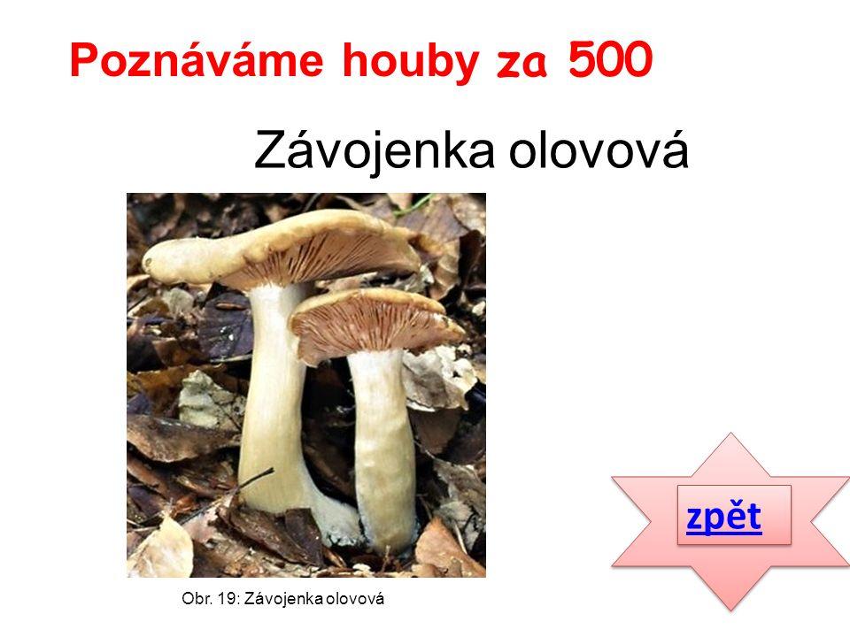 zpět Poznáváme houby za 500 Obr. 19: Závojenka olovová Závojenka olovová