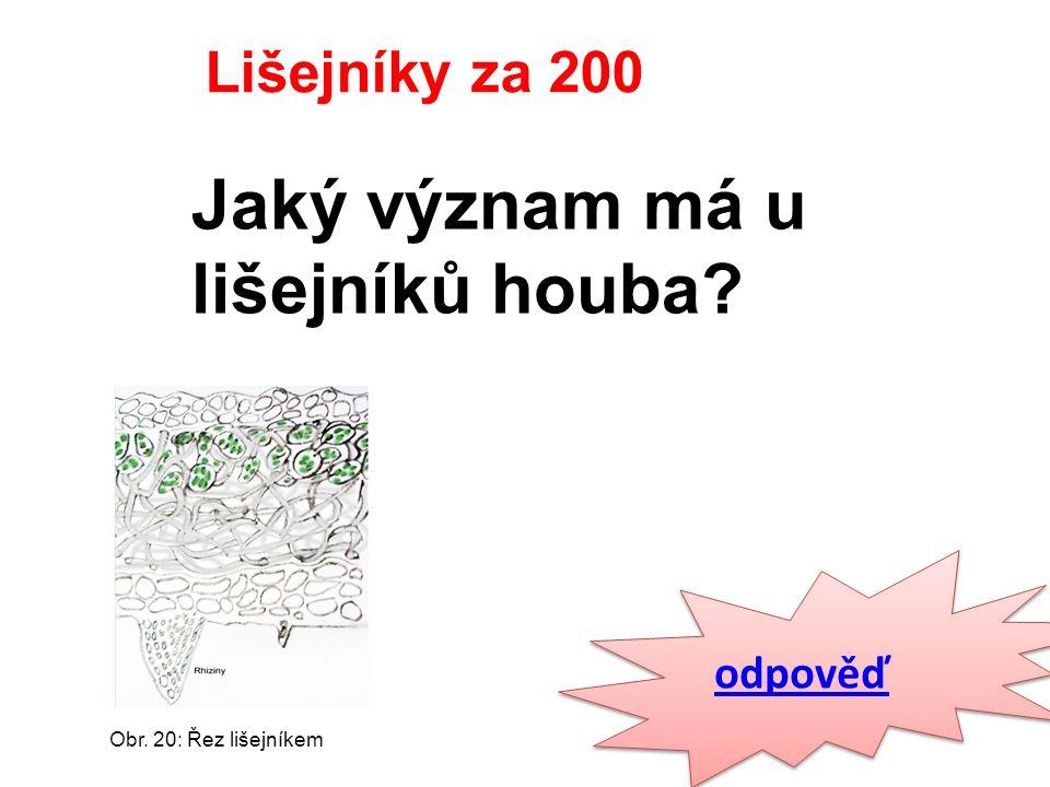 odpověď Lišejníky za 200 Jaký význam má u lišejníků houba Obr. 20: Řez lišejníkem