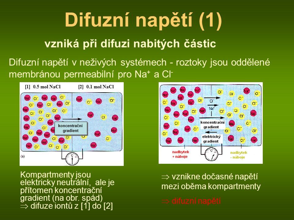 Difuzní napětí (1) vzniká při difuzi nabitých částic Difuzní napětí v neživých systémech - roztoky jsou oddělené membránou permeabilní pro Na + a Cl - [1] 0.5 mol NaCl[2] 0.1 mol NaCl Kompartmenty jsou elektricky neutrální, ale je přítomen koncentrační gradient (na obr.