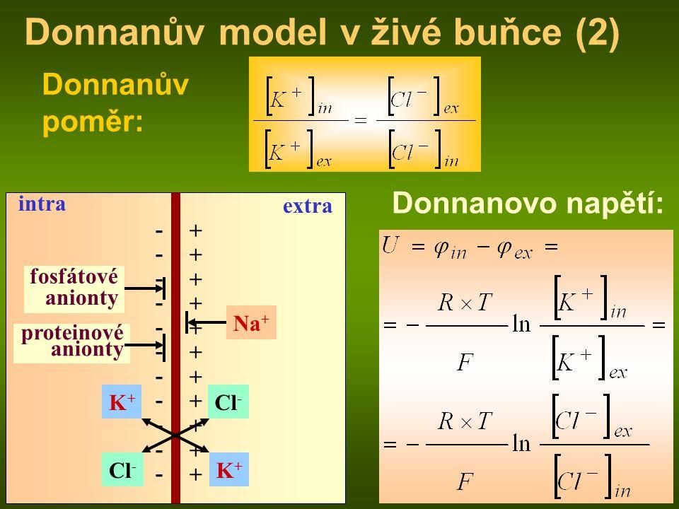 intra extra fosfátové anionty proteinové anionty Na + Cl - K+K+ K+K+ Donnanův poměr: Donnanovo napětí: ---------------------- ++++++++++++++++++++++ Donnanův model v živé buňce (2)