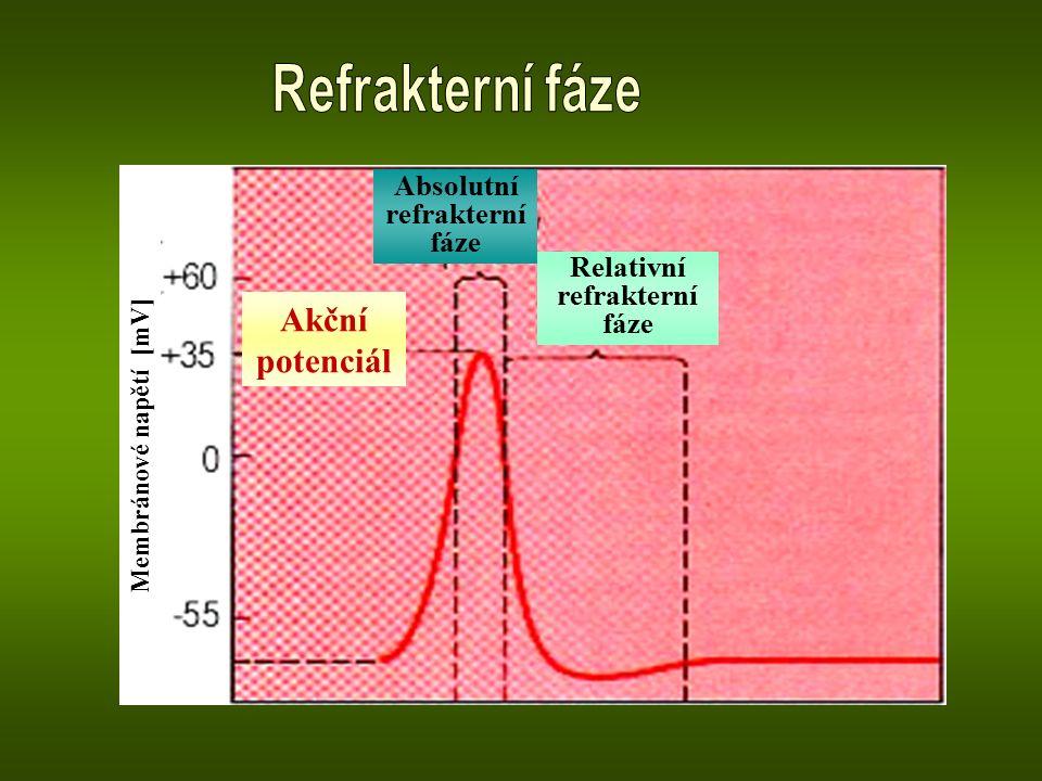 Akční potenciál Absolutní refrakterní fáze Relativní refrakterní fáze
