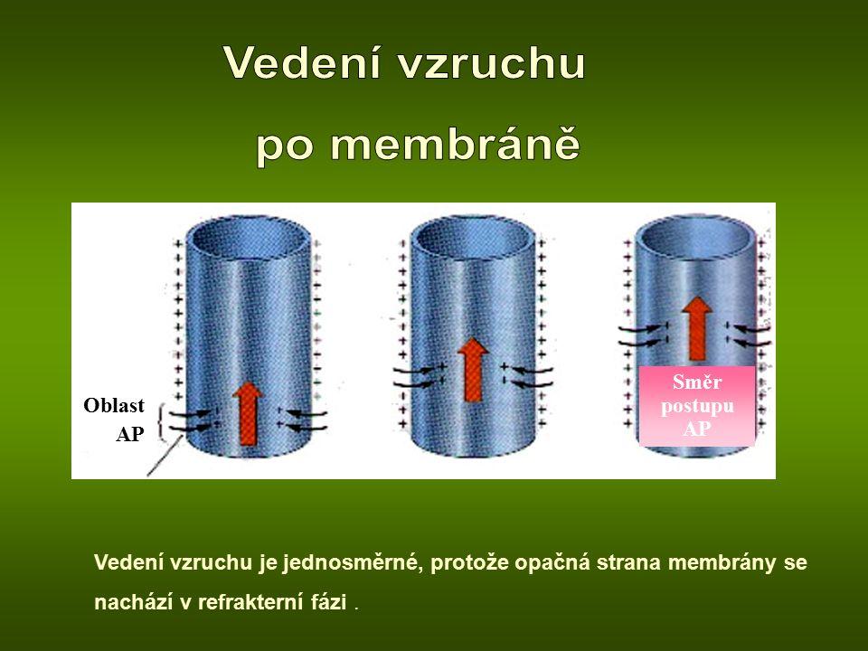 Oblast AP Směr postupu AP Vedení vzruchu je jednosměrné, protože opačná strana membrány se nachází v refrakterní fázi.