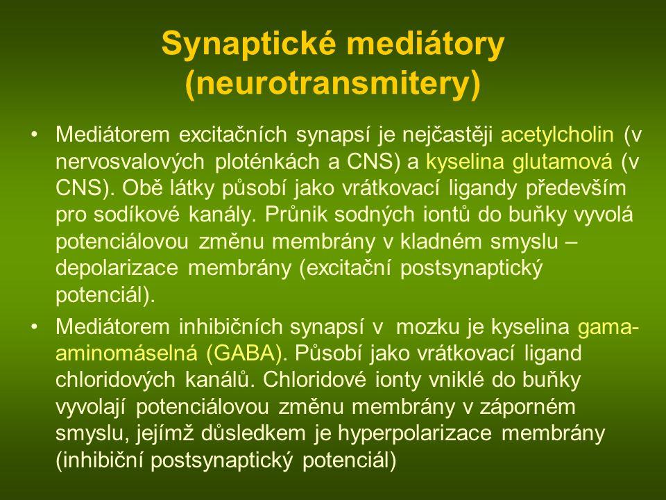 Synaptické mediátory (neurotransmitery) Mediátorem excitačních synapsí je nejčastěji acetylcholin (v nervosvalových ploténkách a CNS) a kyselina glutamová (v CNS).