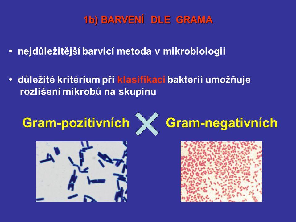 nejdůležitější barvící metoda v mikrobiologii důležité kritérium při klasifikaci bakterií umožňuje rozlišení mikrobů na skupinu Gram-pozitivních Gram-negativních