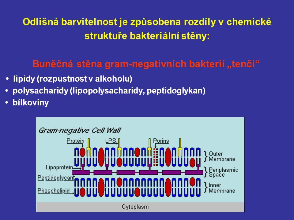 """Odlišná barvitelnost je způsobena rozdíly v chemické struktuře bakteriální stěny: Buněčná stěna gram-negativních bakterií """"tenčí lipidy (rozpustnost v alkoholu) polysacharidy (lipopolysacharidy, peptidoglykan) bílkoviny"""