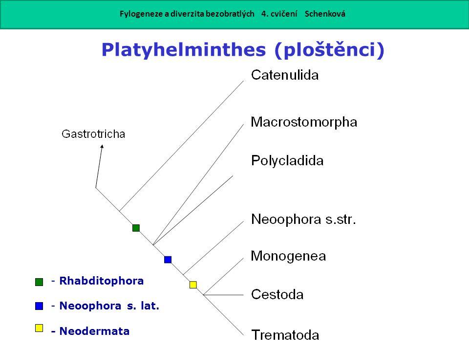 Platyhelminthes (ploštěnci) - Rhabditophora - Neoophora s.