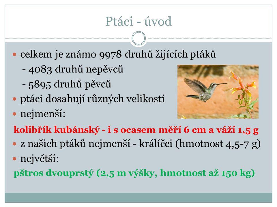Ptáci - úvod celkem je známo 9978 druhů žijících ptáků - 4083 druhů nepěvců - 5895 druhů pěvců ptáci dosahují různých velikostí nejmenší: z našich ptáků nejmenší - králíčci (hmotnost 4,5-7 g) největší: kolibřík kubánský - i s ocasem měří 6 cm a váží 1,5 g pštros dvouprstý (2,5 m výšky, hmotnost až 150 kg)