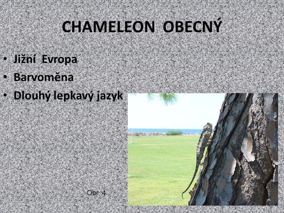 CHAMELEON OBECNÝ Jižní Evropa Barvoměna Dlouhý lepkavý jazyk Obr. 4