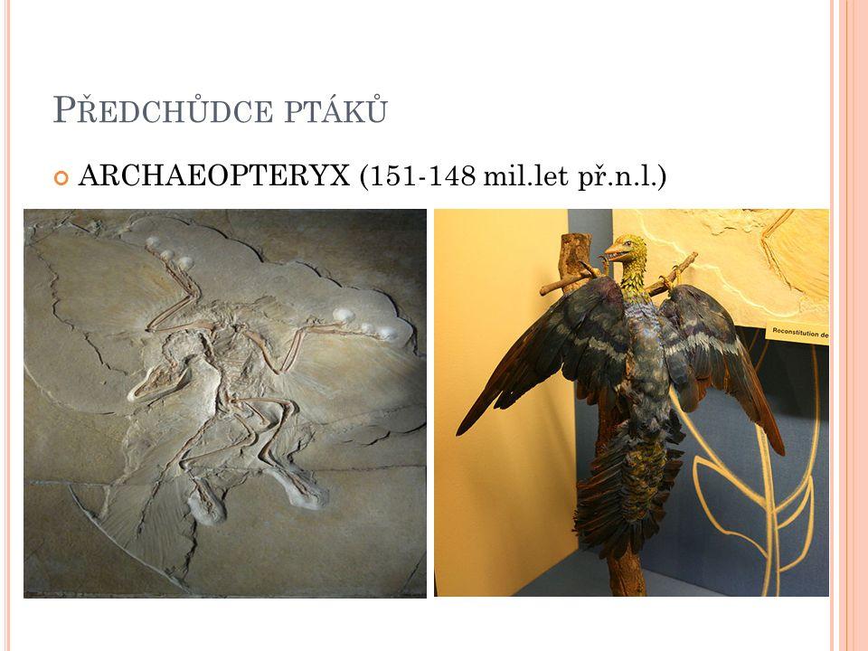 P ŘEDCHŮDCE PTÁKŮ ARCHAEOPTERYX (151-148 mil.let př.n.l.)