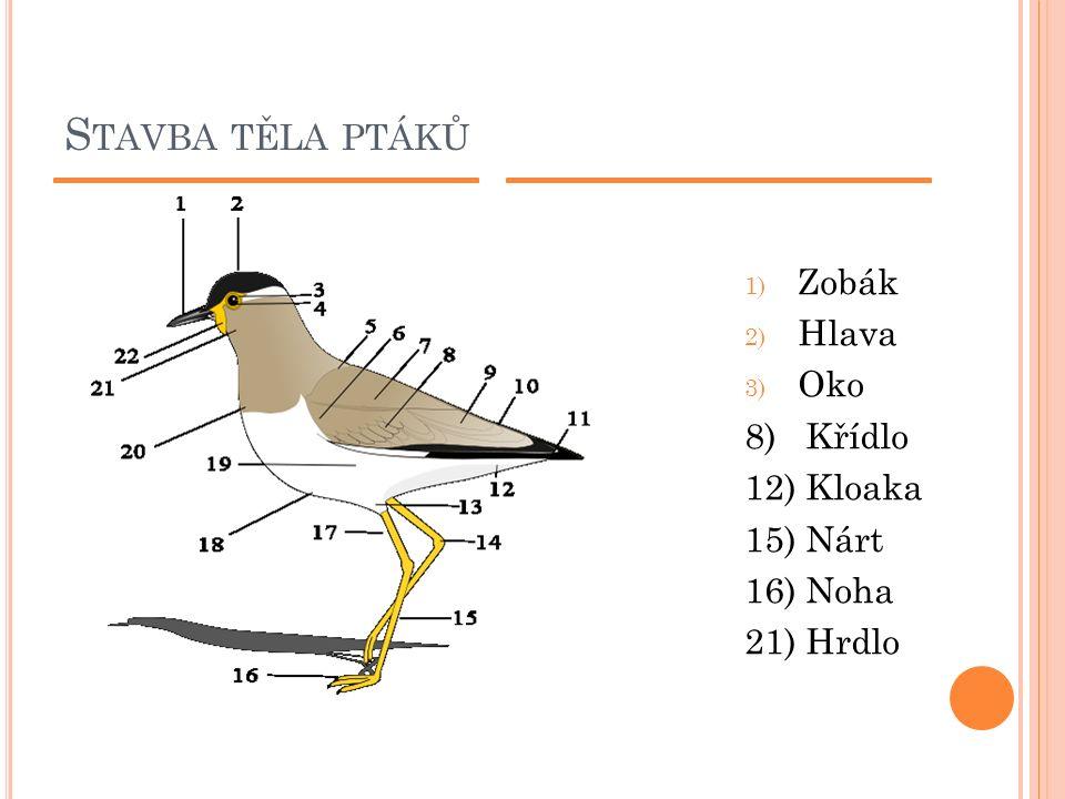 S TAVBA TĚLA PTÁKŮ 1) Zobák 2) Hlava 3) Oko 8) Křídlo 12) Kloaka 15) Nárt 16) Noha 21) Hrdlo