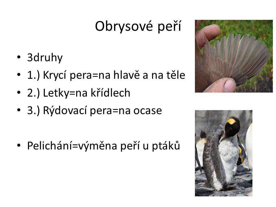 Obrysové peří 3druhy 1.) Krycí pera=na hlavě a na těle 2.) Letky=na křídlech 3.) Rýdovací pera=na ocase Pelichání=výměna peří u ptáků