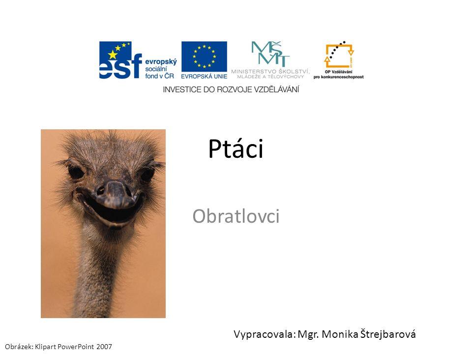 Ptáci Obratlovci Vypracovala: Mgr. Monika Štrejbarová Obrázek: Klipart PowerPoint 2007