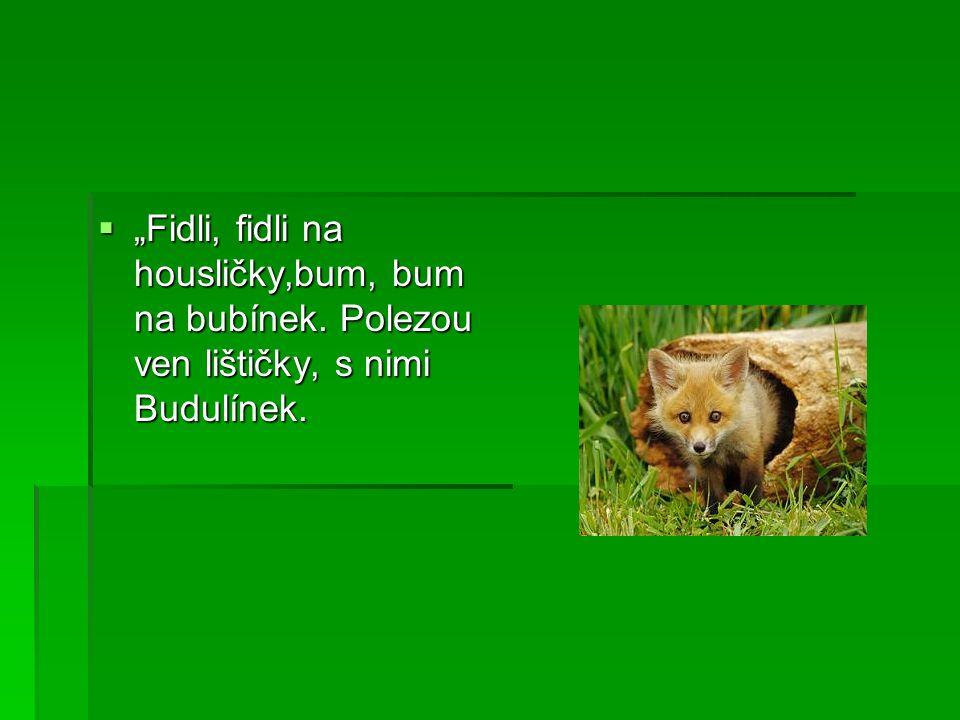 """ """"Fidli, fidli na housličky,bum, bum na bubínek. Polezou ven lištičky, s nimi Budulínek."""