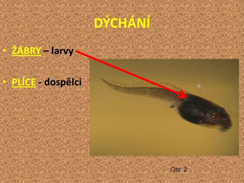 DÝCHÁNÍ ŽÁBRY – larvy PLÍCE - dospělci Obr. 2