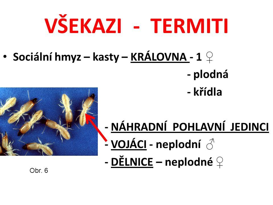 VŠEKAZI - TERMITI Sociální hmyz – kasty – KRÁLOVNA - 1 ♀ - plodná - křídla - NÁHRADNÍ POHLAVNÍ JEDINCI - VOJÁCI - neplodní ♂ - DĚLNICE – neplodné ♀ Obr.
