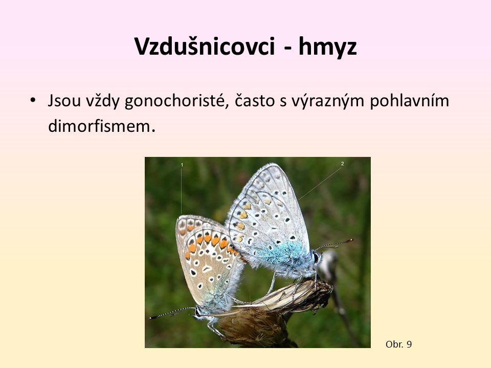 Vzdušnicovci - hmyz Jsou vždy gonochoristé, často s výrazným pohlavním dimorfismem. Obr. 9