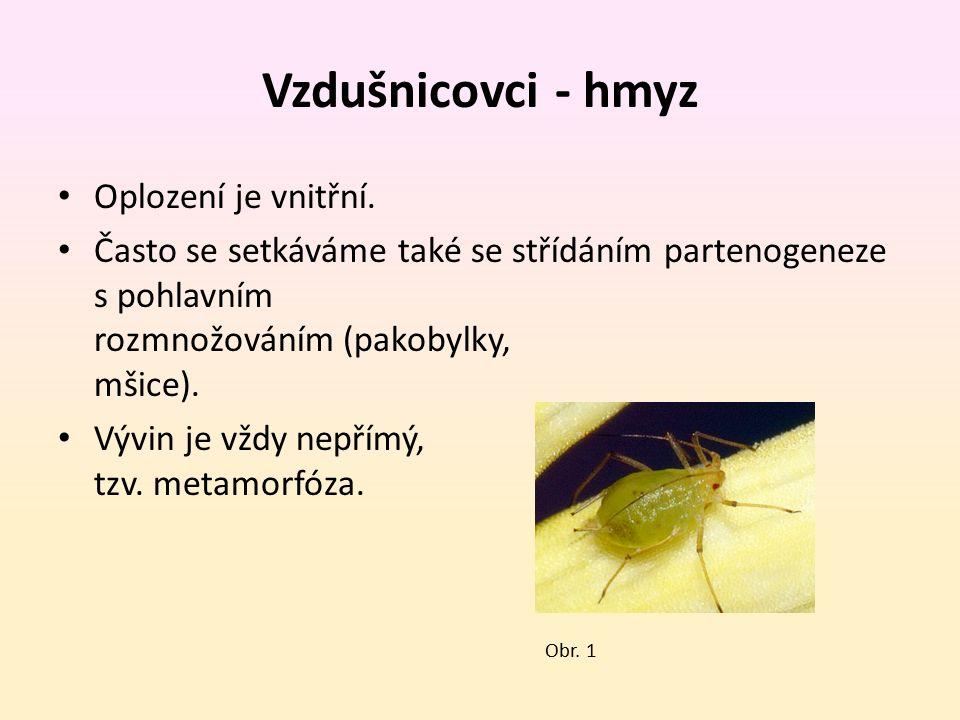 Vzdušnicovci - hmyz Oplození je vnitřní. Často se setkáváme také se střídáním partenogeneze s pohlavním rozmnožováním (pakobylky, mšice). Vývin je vžd