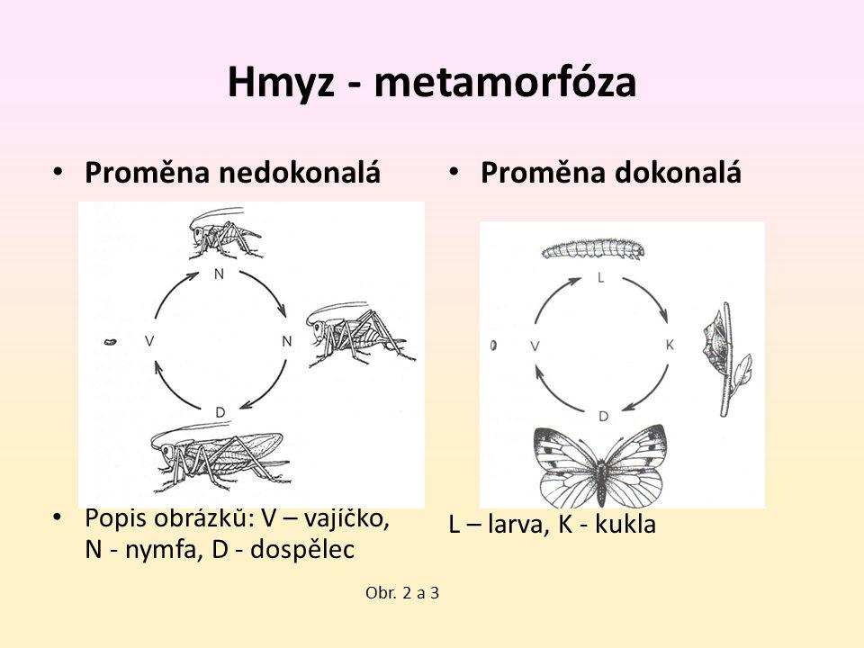 Hmyz - metamorfóza Proměna nedokonalá Popis obrázků: V – vajíčko, N - nymfa, D - dospělec Proměna dokonalá L – larva, K - kukla Obr. 2 a 3