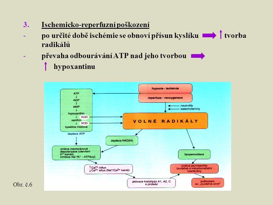 3.Ischemicko-reperfuzní poškození -po určité době ischémie se obnoví přísun kyslíku tvorba radikálů -převaha odbourávání ATP nad jeho tvorbou hypoxantinu Obr.