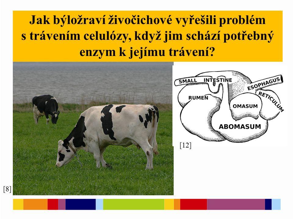 [8] [12] Jak býložraví živočichové vyřešili problém s trávením celulózy, když jim schází potřebný enzym k jejímu trávení