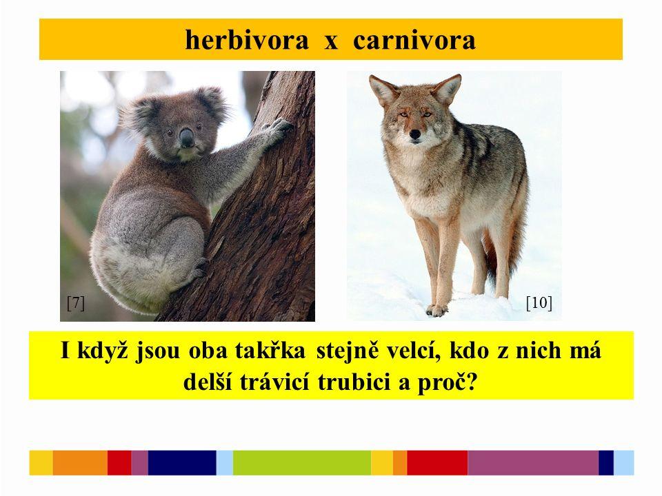 herbivora x carnivora [7][10] I když jsou oba takřka stejně velcí, kdo z nich má delší trávicí trubici a proč