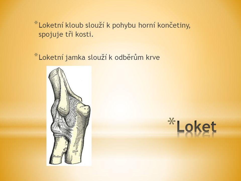 * Loketní kloub slouží k pohybu horní končetiny, spojuje tři kosti. * Loketní jamka slouží k odběrům krve