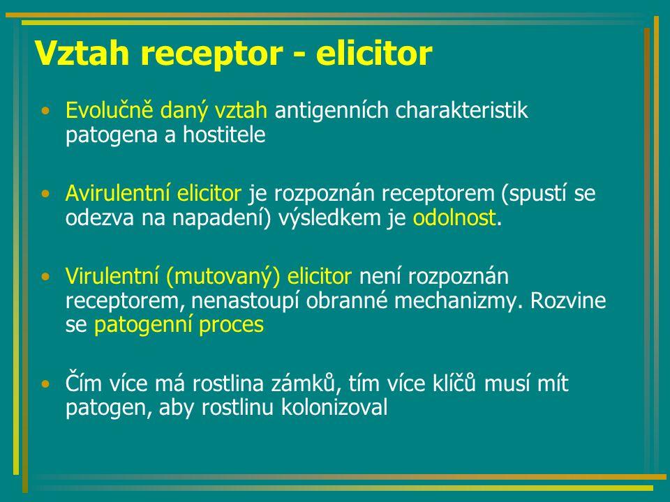 Vztah receptor - elicitor Evolučně daný vztah antigenních charakteristik patogena a hostitele Avirulentní elicitor je rozpoznán receptorem (spustí se odezva na napadení) výsledkem je odolnost.