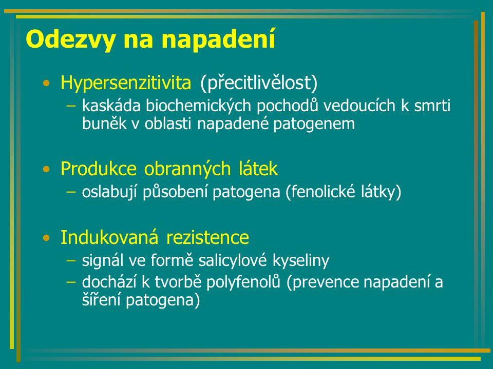 Odezvy na napadení Hypersenzitivita (přecitlivělost) –kaskáda biochemických pochodů vedoucích k smrti buněk v oblasti napadené patogenem Produkce obranných látek –oslabují působení patogena (fenolické látky) Indukovaná rezistence –signál ve formě salicylové kyseliny –dochází k tvorbě polyfenolů (prevence napadení a šíření patogena)