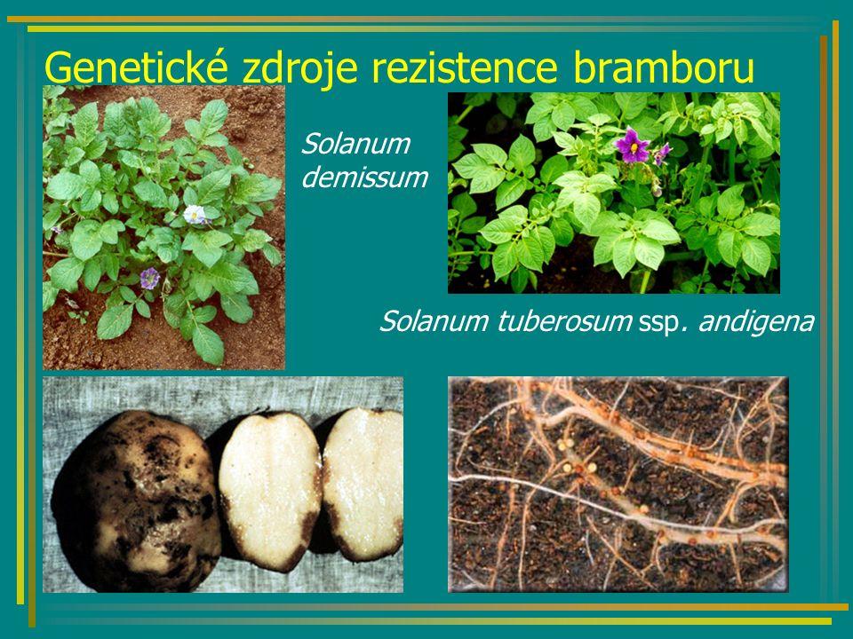 Genetické zdroje rezistence bramboru Solanum demissum Solanum tuberosum ssp. andigena