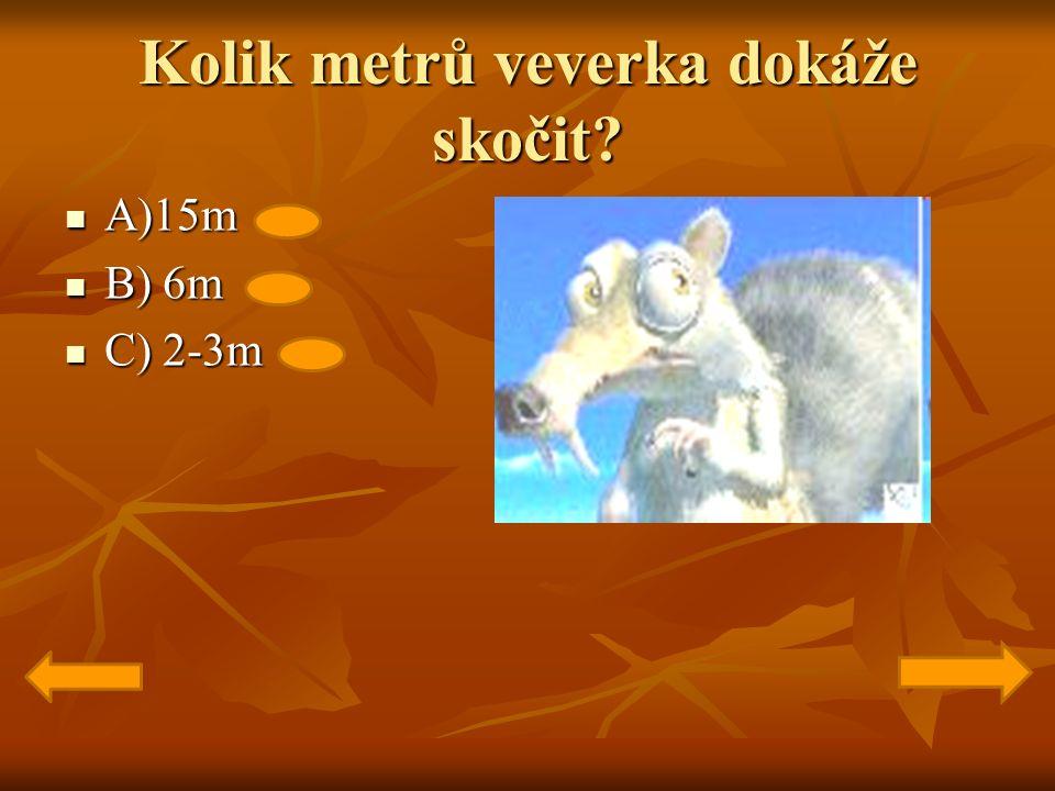 Kolik metrů veverka dokáže skočit A)15m A)15m B) 6m B) 6m C) 2-3m C) 2-3m