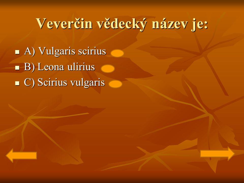 Veverčin vědecký název je: A) Vulgaris scirius A) Vulgaris scirius B) Leona ulirius B) Leona ulirius C) Scirius vulgaris C) Scirius vulgaris