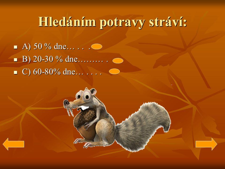 Hledáním potravy stráví: A) 50 % dne…... A) 50 % dne…...
