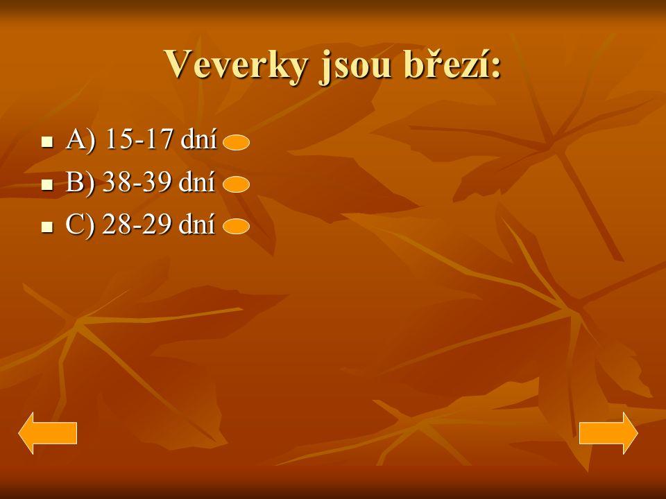 Veverky jsou březí: A) 15-17 dní A) 15-17 dní B) 38-39 dní B) 38-39 dní C) 28-29 dní C) 28-29 dní