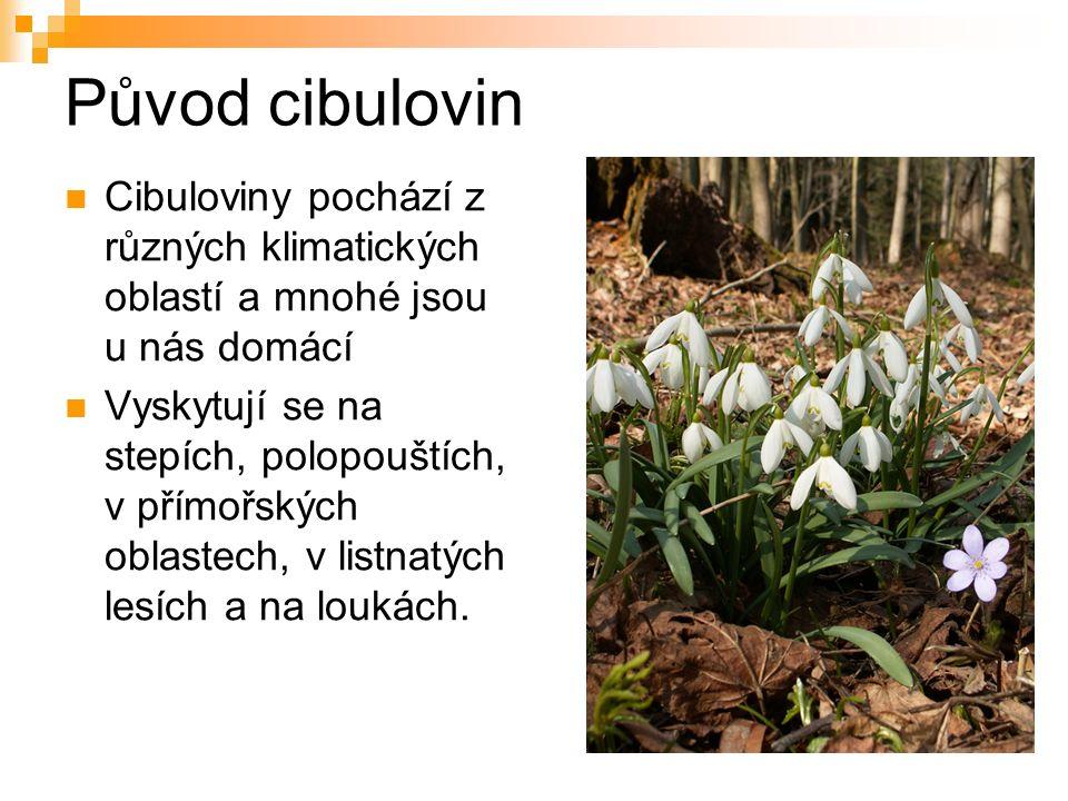 Původ cibulovin Cibuloviny pochází z různých klimatických oblastí a mnohé jsou u nás domácí Vyskytují se na stepích, polopouštích, v přímořských oblastech, v listnatých lesích a na loukách.