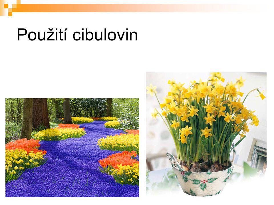"""ZDROJE """"AUTOR NEUVEDEN .chirurg-silhavy.cz [online]."""