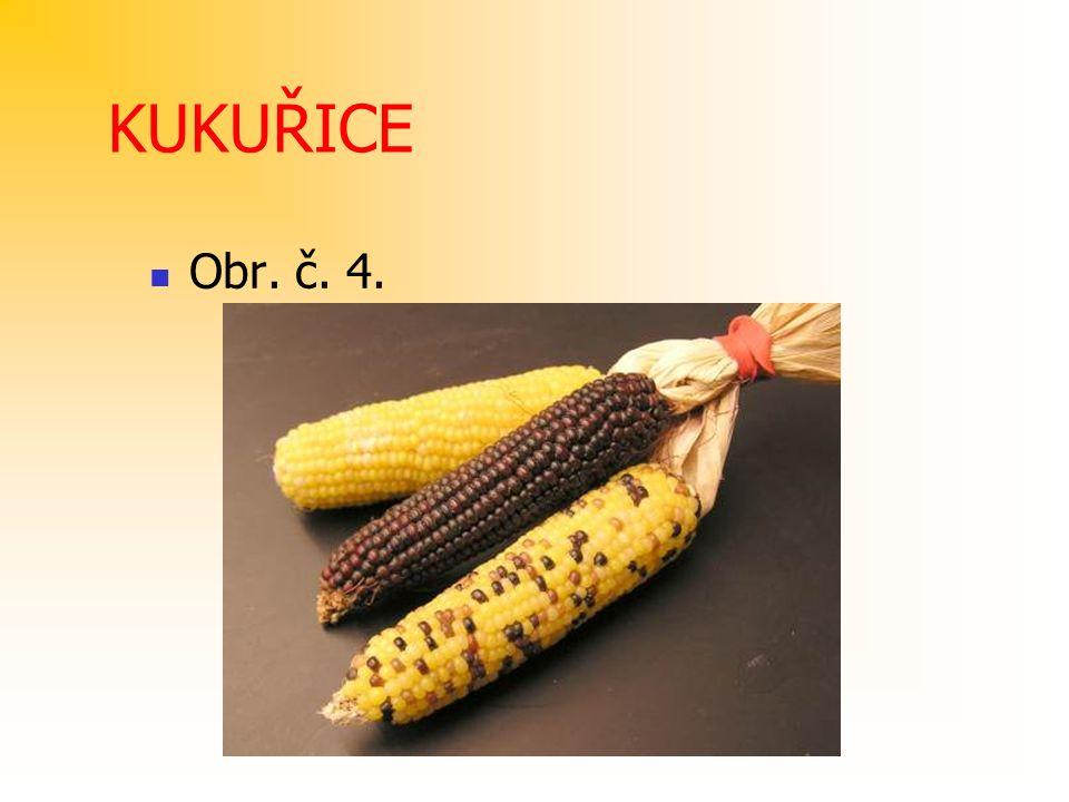 KUKUŘICE Obr. č. 4.