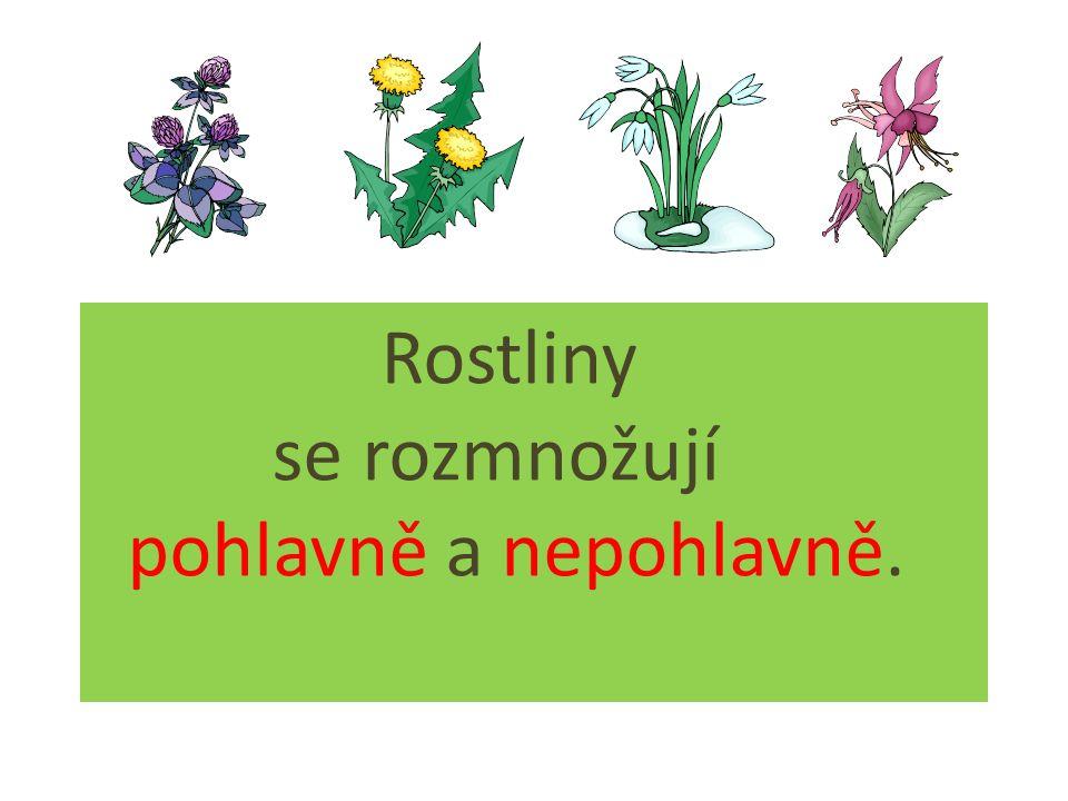 Rostliny se rozmnožují pohlavně a nepohlavně.