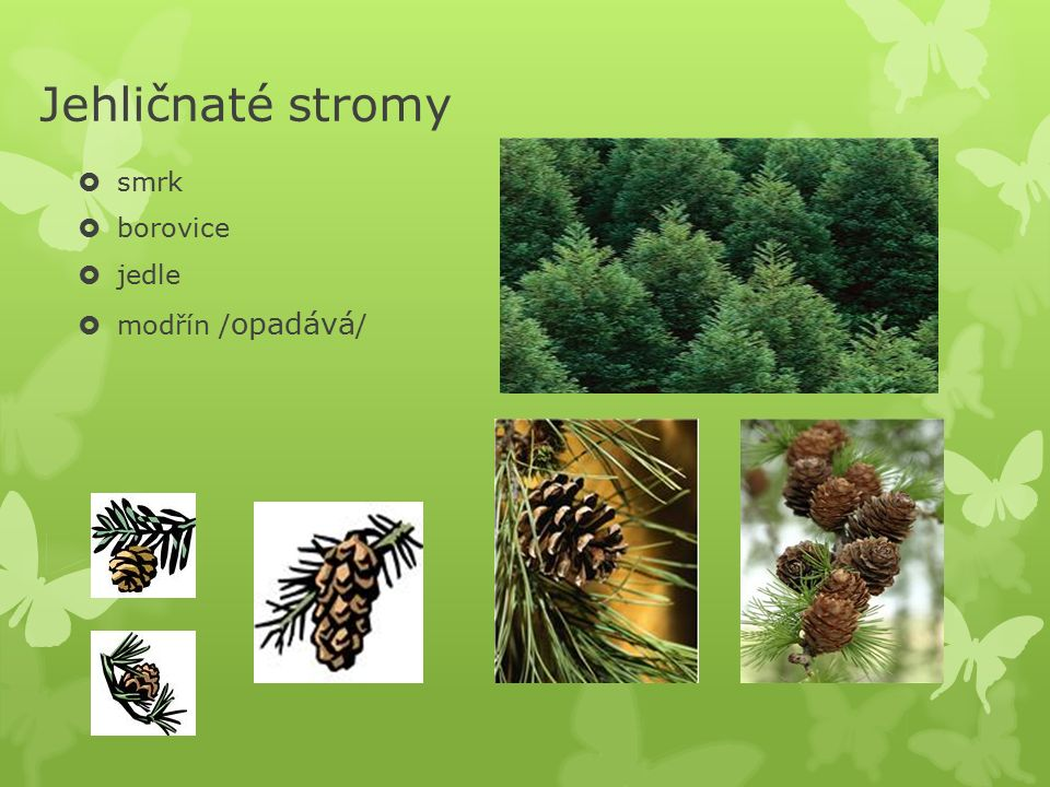 Druhy lesů  jehličnaté  listnaté  smíšené