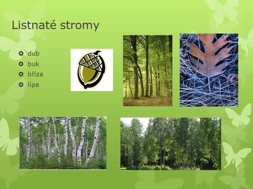 Jehličnaté stromy  smrk  borovice  jedle  modřín / opadává /