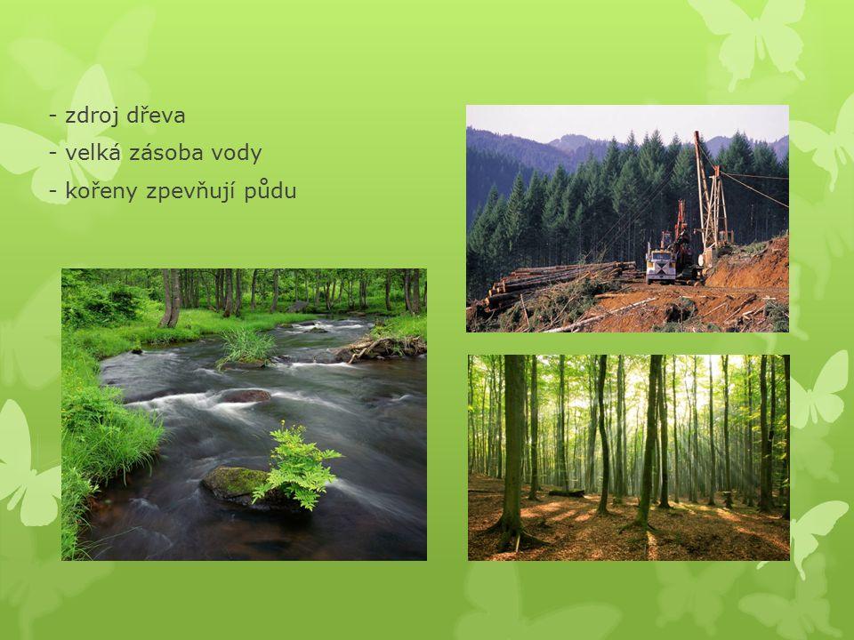 Význam lesa - odpočinek - zdravé ovzduší – plíce Země