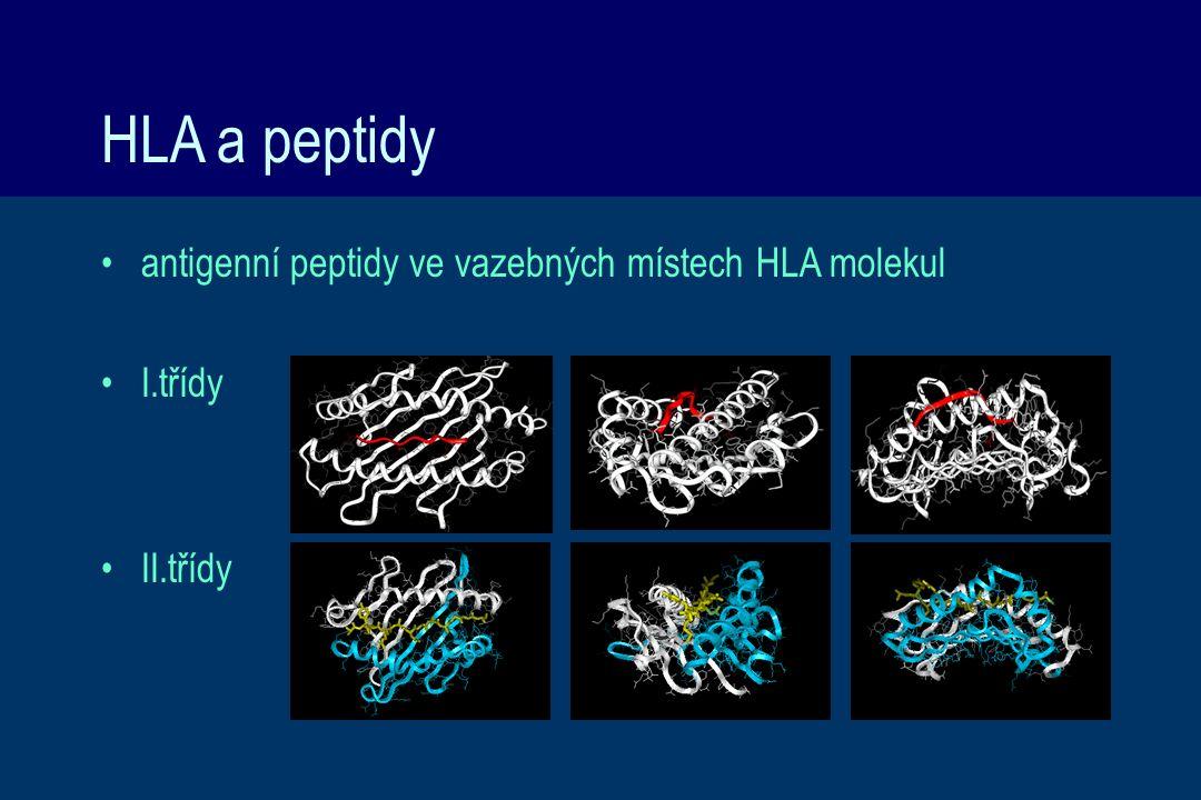 HLA a peptidy antigenní peptidy ve vazebných místech HLA molekul I.třídy II.třídy
