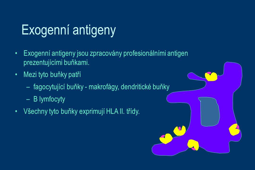 Exogenní antigeny Exogenní antigeny jsou zpracovány profesionálními antigen prezentujícími buňkami.