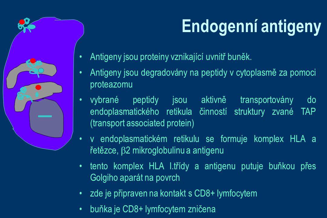 Endogenní antigeny Antigeny jsou proteiny vznikající uvnitř buněk.
