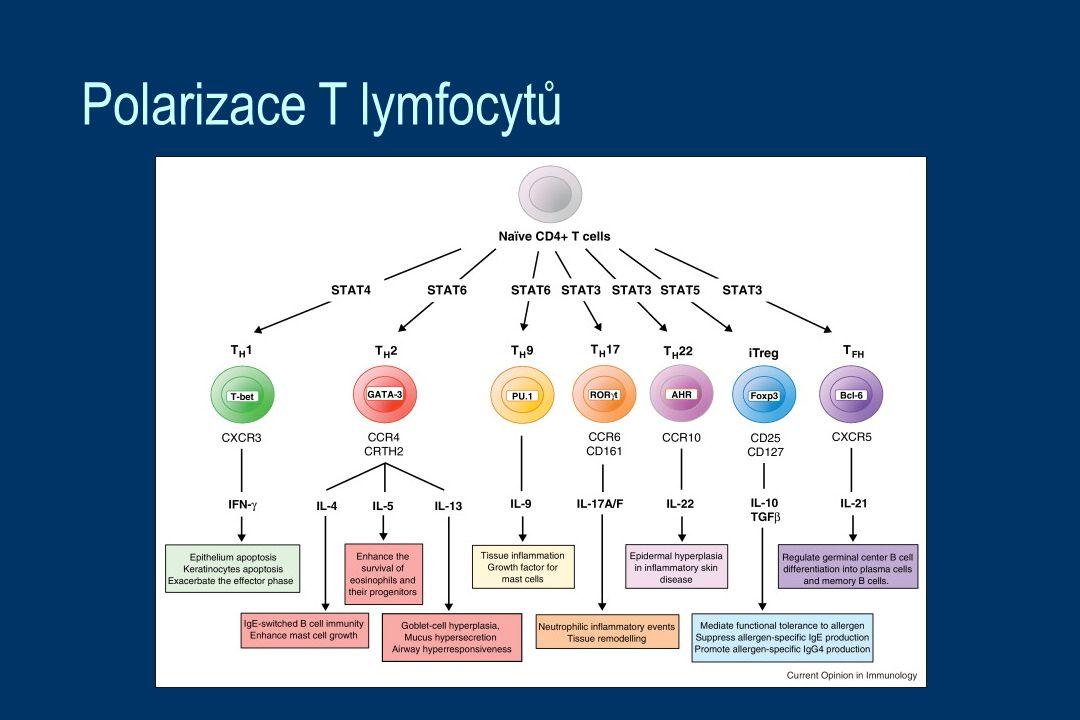 Polarizace T lymfocytů