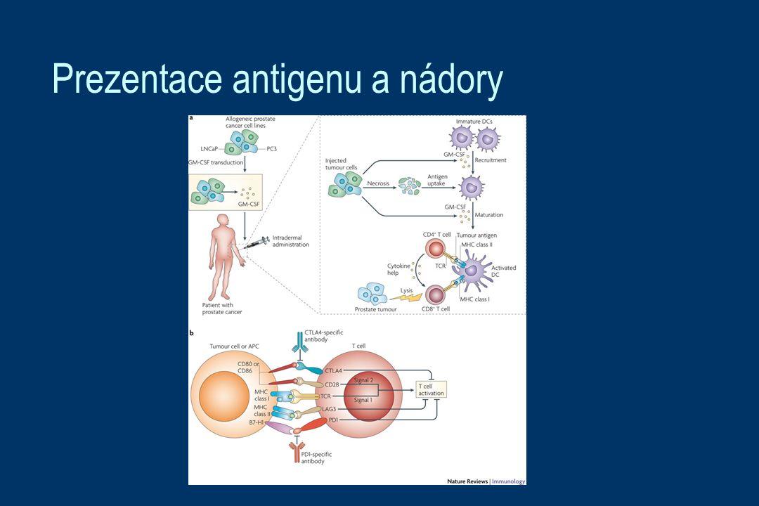 Prezentace antigenu a nádory
