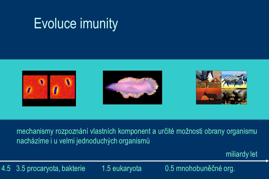 Evoluce imunity mechanismy rozpoznání vlastních komponent a určité možnosti obrany organismu nacházíme i u velmi jednoduchých organismů 4.5 3.5 procaryota, bakterie 1.5 eukaryota 0.5 mnohobuněčné org.