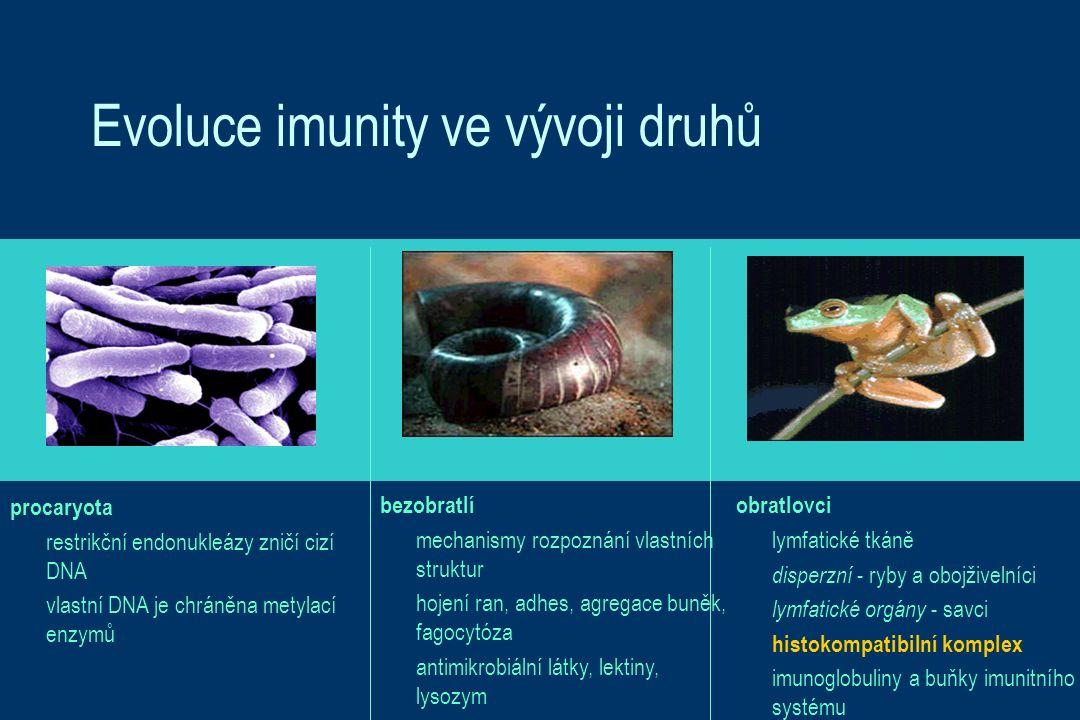 Evoluce imunity ve vývoji druhů procaryota restrikční endonukleázy zničí cizí DNA vlastní DNA je chráněna metylací enzymů obratlovci lymfatické tkáně disperzní - ryby a obojživelníci lymfatické orgány - savci histokompatibilní komplex imunoglobuliny a buňky imunitního systému bezobratlí mechanismy rozpoznání vlastních struktur hojení ran, adhes, agregace buněk, fagocytóza antimikrobiální látky, lektiny, lysozym