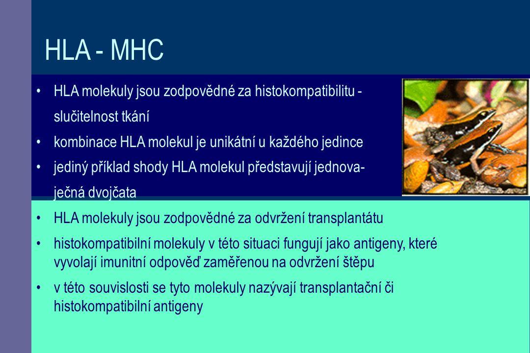 HLA - MHC HLA molekuly jsou zodpovědné za histokompatibilitu - slučitelnost tkání kombinace HLA molekul je unikátní u každého jedince jediný příklad shody HLA molekul představují jednova- ječná dvojčata HLA molekuly jsou zodpovědné za odvržení transplantátu histokompatibilní molekuly v této situaci fungují jako antigeny, které vyvolají imunitní odpověď zaměřenou na odvržení štěpu v této souvislosti se tyto molekuly nazývají transplantační či histokompatibilní antigeny.