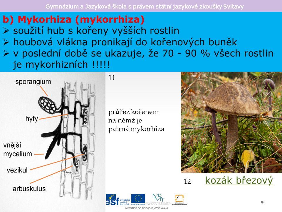 Gymnázium a Jazyková škola s právem státní jazykové zkoušky Svitavy b) Mykorhiza (mykorrhiza)  soužití hub s kořeny vyšších rostlin  houbová vlákna pronikají do kořenových buněk  v poslední době se ukazuje, že 70 - 90 % všech rostlin je mykorhizních !!!!.