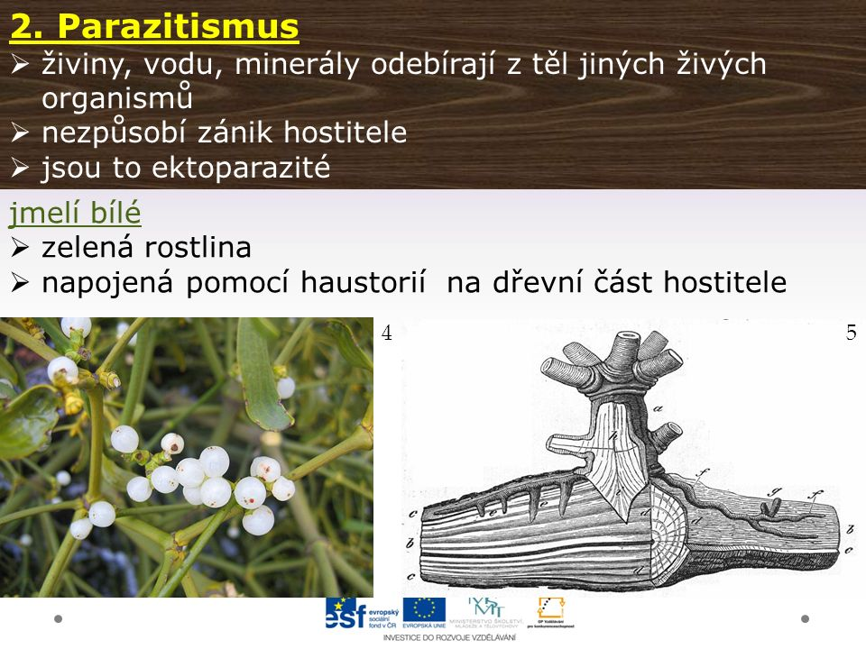 Gymnázium a Jazyková škola s právem státní jazykové zkoušky Svitavy 2.